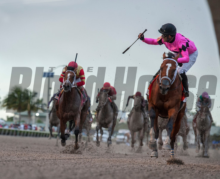 Maximum Security with Luis Saez up. wins The Xpressbet Florida Derby .  @ Gulfstream Park.  March 30 2019<br /> ©JoeDiOrio/Winningimages.biz