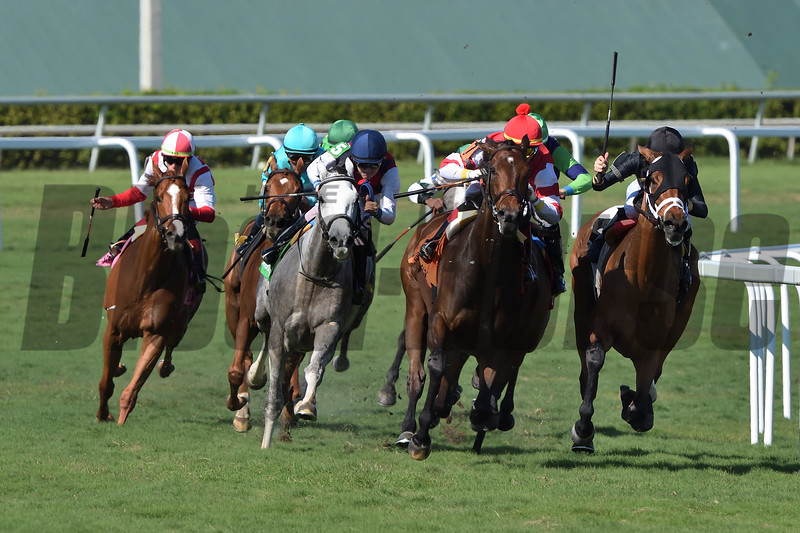 Cambier Parc wins the 2019 Herecomesthebride Stakes at Gulfstream Park<br /> Coglianese Photos/Tim Sullivan
