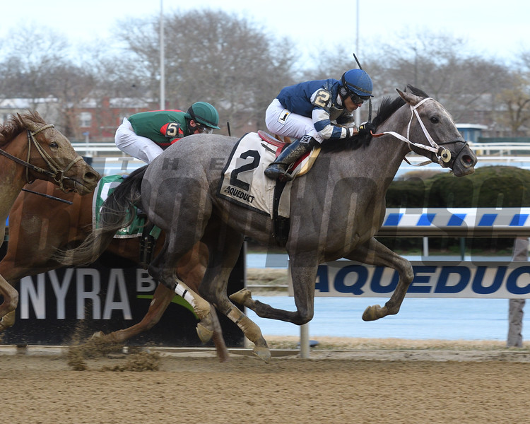 Pats No Fool wins 2019 Maddie May Stakes at Aqueduct. Photo: Coglianese Photos/Susie Raisher