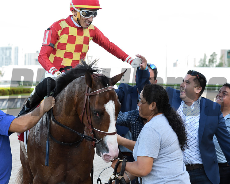Graceful Kitten wins the 2019 Proud Man Stakes at Gulfstream Park<br /> Coglianese Photos/Ryan Thompson