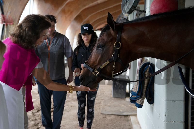City of Light leaves Gulfstream Park after the 2019 Pegasus World Cup<br /> Coglianese Photos/Zoe Metz