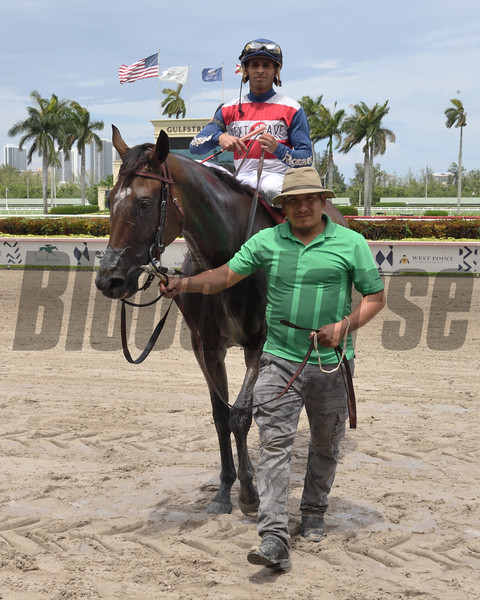Supercommittee wins the 2019 Ginger Punch Stakes at Gulfstream Park<br /> Coglianese Photos/Lauren King