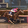 City of Light wins the 2019 Pegasus World Cup Invitational     <br /> Coglianse Photos/Derbe Glass