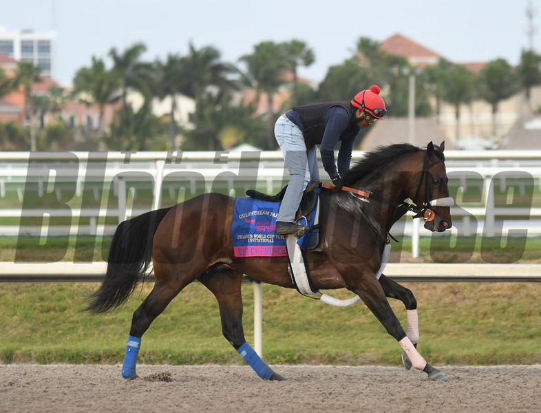 Delta Prince - Gulfstream Park - 012419<br /> Photo: Joe DiOrio