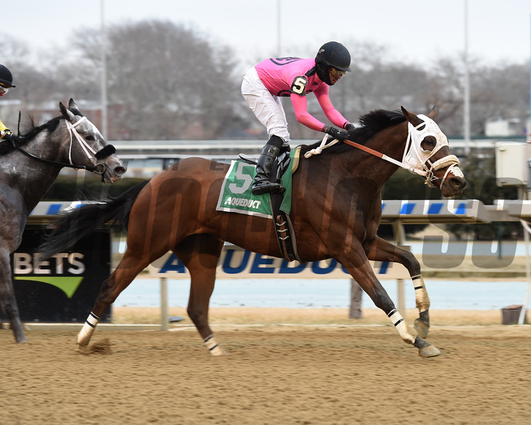 Solid Wager wins the 2019 Toboggan Stakes at Aqueduct<br /> Coglianese Photos/Susie Raisher