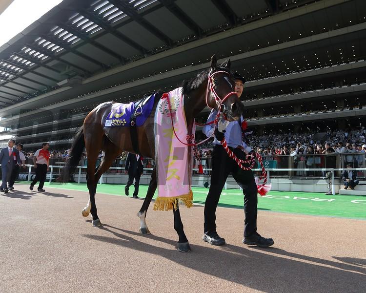 Loves Only You wins the Yushun Himba (Japanese Oaks) at Tokyo Racecourse. Photo: Masakazu Takahashi