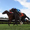 Catch a Bid wins the 2019 Riskaverse Stakes at Saratoga <br /> Coglianese Photos