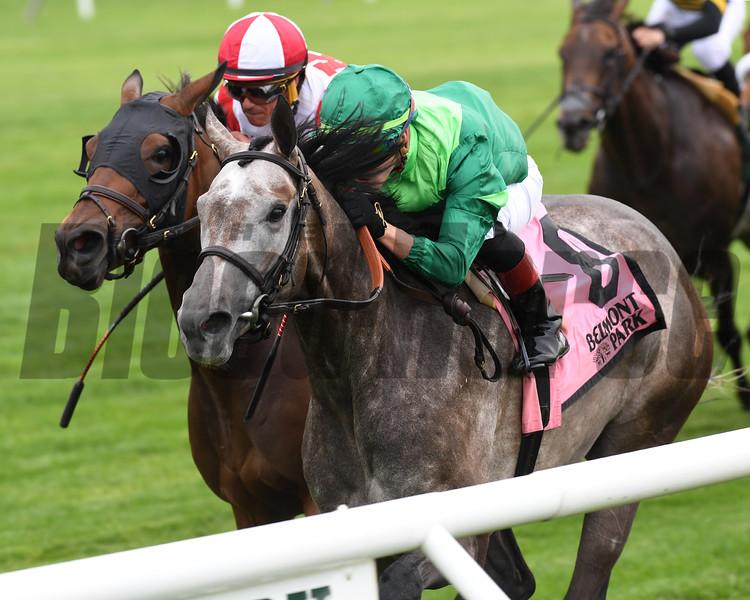 Homerique wins the 2019 New York Stakes at Belmont Park<br /> Coglianese Photos/Elsa Lorieul