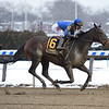 Royal Albert Hall wins the 2019 Bernardini Stakes at Aqueduct<br /> Coglianese Photos/Susie Raisher