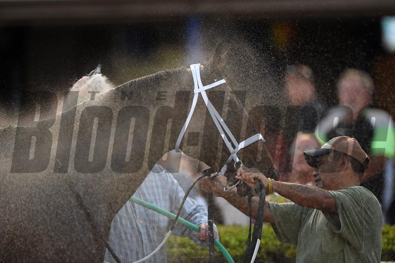 Zulu Alpha wins the 2019 Mac Diarmida Stakes at Gulfstream Park<br /> Coglianese Photos/Tim Sullivan