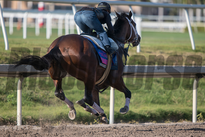 City of Light and Javier Castellano - Gulfstream Park, January 19, 2019<br /> Joe DiOrio Photo