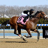Bon Raison wins the 2019 Peeping Tom Stakes at Aqueduct<br /> Coglianese Photos/Susie Raisher