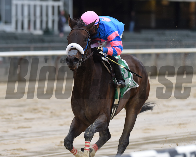 Come Dancing wins the Ruffian Stakes Sunday, May 5, 2019 at Belmont Park. Photo: Coglianese Photos/Chelsea Durand