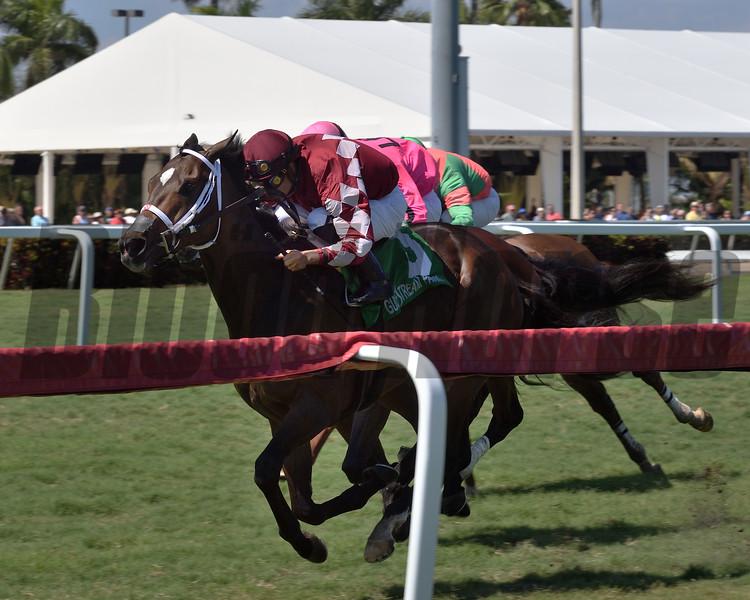 A Thread of Blue wins the 2019 Palm Beach Stakes at Gulfstream Park<br /> Coglianese Photos/Derbe Glass