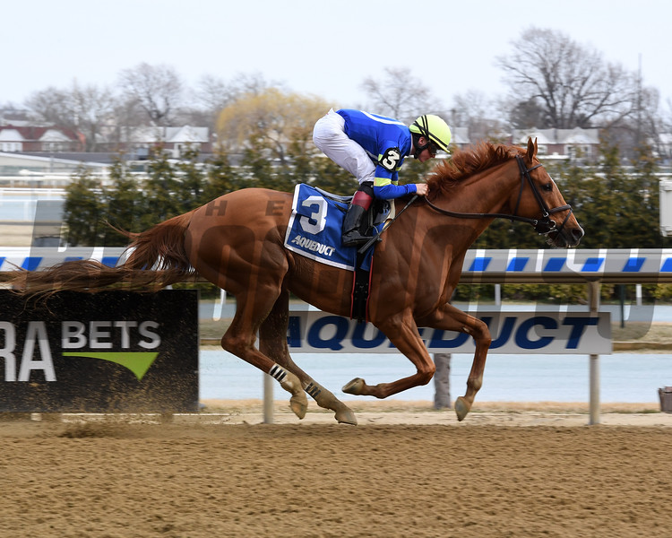 Its All Relevant wins the 2019 Dads Caps Stakes at Aqueduct<br /> Coglianese Photos/Chelsea Durand