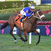 A Bit Special wins the Sweetest Chant Stakes at Gulfstream Park Sunday, February 3, 2019. Photo: Coglianese Photos/Lauren King