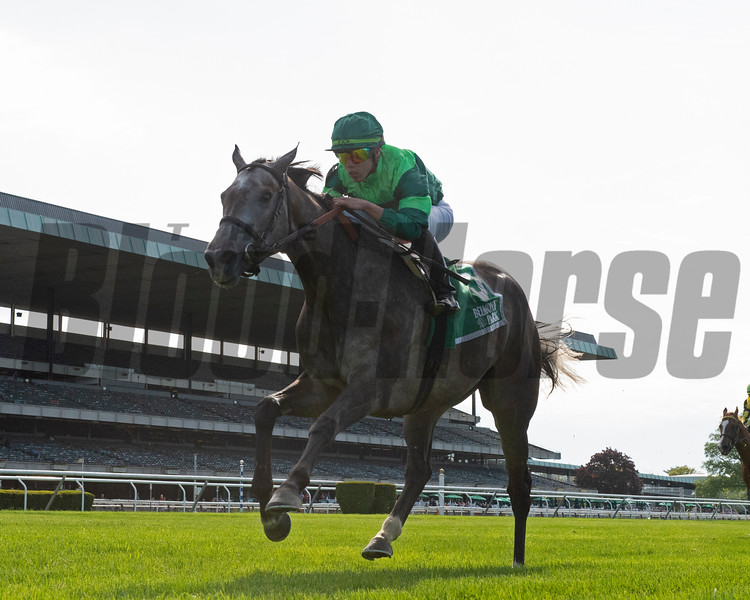 Homerique wins the 2019 Beaugay Stakes at Belmont Park<br /> Coglianese Photos/Chelsea Durand