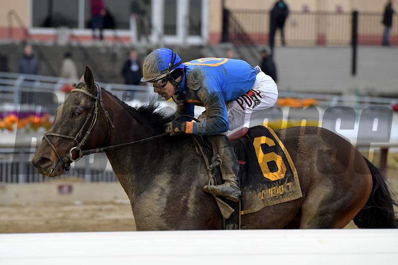 Royal Albert Hall wins the 2019 Bernardini Stakes at Aqueduct<br /> Coglianese Photos/Joe Labozzetta