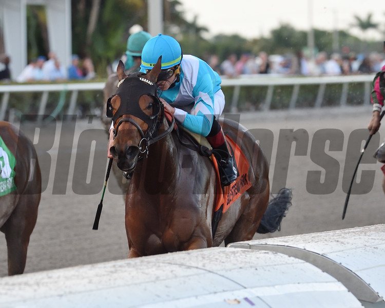 Blamed wins the 2019 Royal Delta Stakes at Gulfstream Park<br /> Coglianese Photos/Derbe Glass