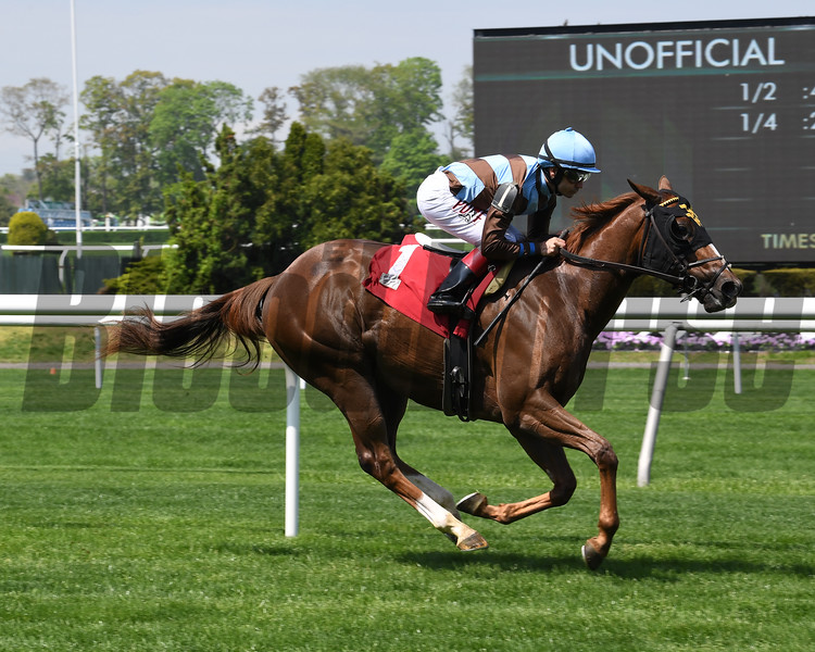 Foolish Humor - Maiden Win, Belmont Park, May 2, 2019<br /> Coglianese Photos