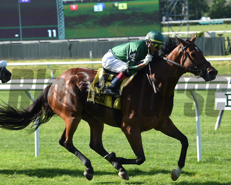 Gucci Factor wins the Kingston Stakes Monday, May 27, 2019 at Belmont Park. Photo: Coglianese Photos/Derbe Glass