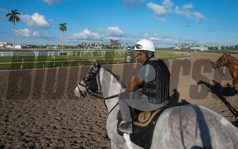 Unbridled Juan - Gulfstream Park, January 19, 2019<br /> Joe DiOrio Photo