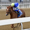 Its All Relevant wins the 2019 Dads Caps Stakes at Aqueduct<br /> Coglianese Photos/Joe Labozzetta