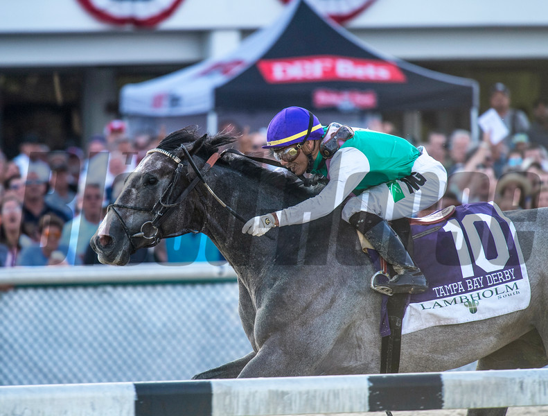 Tactitus. with Jose Oritz up Wins The Lambholn South Tampa Bay Derby   @ Tampa Bay Downs in Oldsmar  Fl  March 9 2019<br /> ©JoeDiOrio/Winningimages.biz