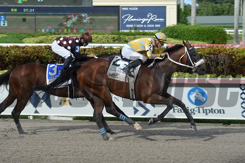 Diamond Oops wins the 2019 Smile Sprint Stakes at Gulfstream Park<br /> Coglianese Photos/Lauren King