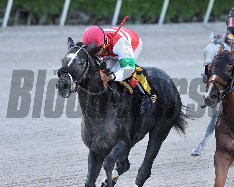 Art G Is Back wins the 2019 Benny The Bull Stakes<br /> Coglianese Photos/Ryan Thompson