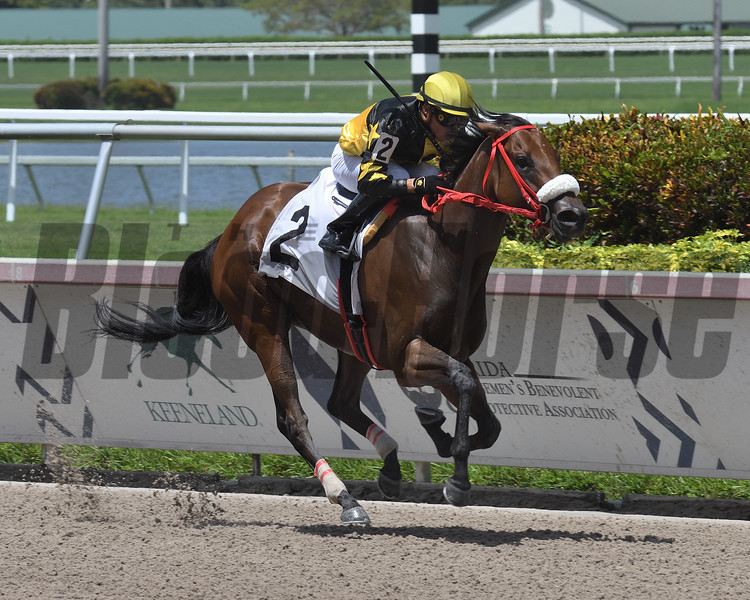 Bella Tormenta breaks her Maiden at Gulfstream Park July 14, 2019. Photo: Coglianese Photos/Ryan Thompson