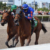 Champagne Anyone wins the 2019 Gulfstream Park Oaks<br /> Coglianese Photos/Derbe Glass