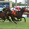 Stirling Drive wins the 2019 Not Surprising Stakes at Gulfstream Park<br /> Coglianese Photos/Lauren King