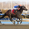 Always Shopping wins 2019 Busanda Stakes at Aqueduct Sunday, February 3, 2019. Photo: Coglianese Photos/Elsa Lorieul