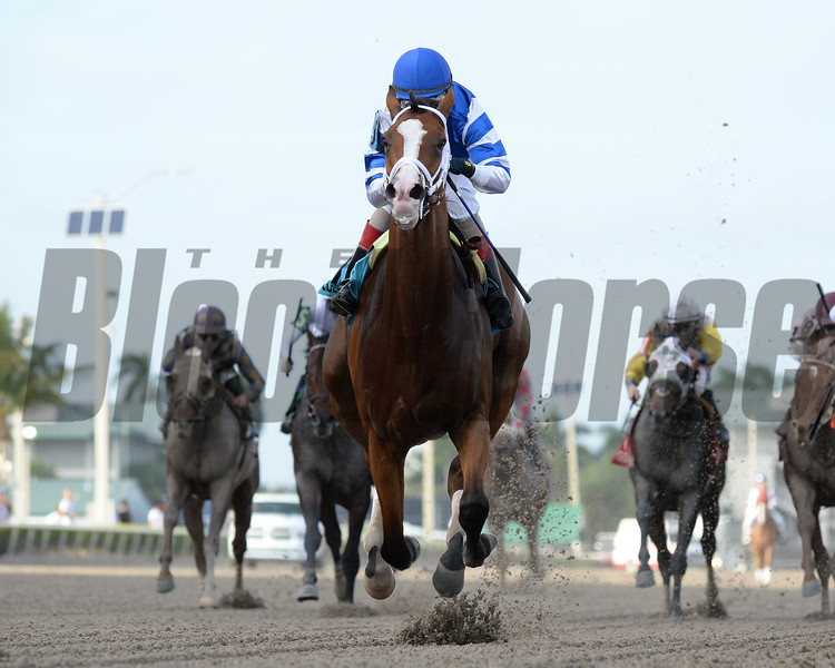 Prince Lucky wins the 2019 Hal's Hope Stakes at Gulfstream Park<br /> Coglianese Photos/Leslie Martin