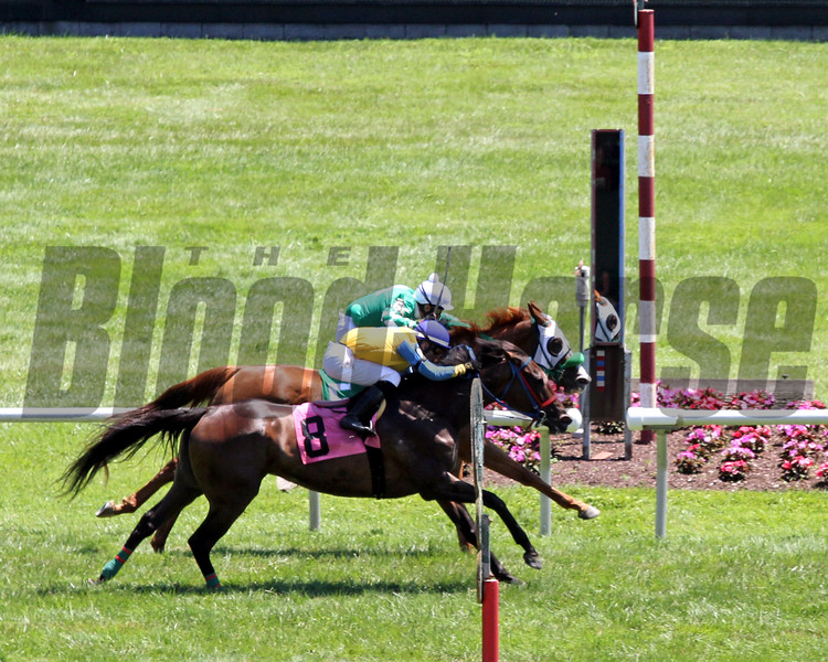Photo Finish at Delaware Park on July 13, 2019. Photo By: Chad B. Harmon