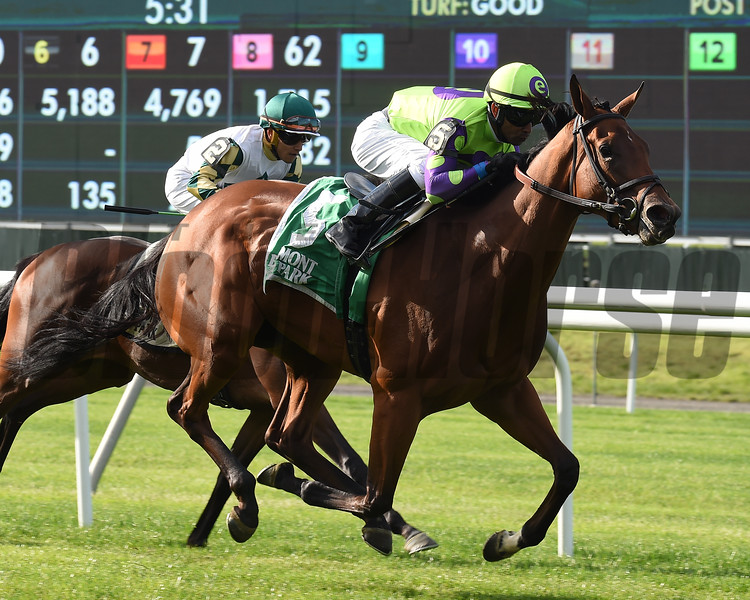 Seek and Destroy wins the 2019 Soaring Softly at Belmont Park<br /> Coglianese Photos/Susie Raisher