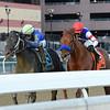 Honor Up wins the 2019 Say Florida Sandy Stakes at Aqueduct<br /> Coglianese Photos/Elsa Lorieul