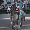 Marconi wins the 2019 Skip Away Stakes at Gulfstream Park.<br /> Coglianese Photos/Derbe Glass