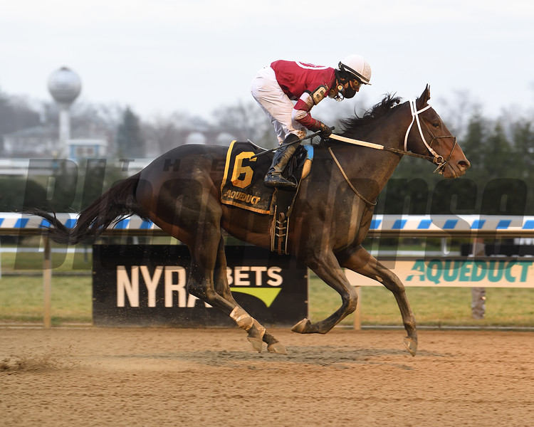 Bankit wins the Alex M. Robb Stakes Saturday, December 12, 2020 at Aqueduct. Photo: Coglianese Photos