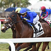 Carotari wins the 2020 Silks Run Stakes at Gulfstream Park<br /> Coglianese Photos/Ryan Thompson