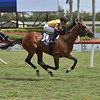 Decorated Invader wins the 2020 Cutler Bay Stakes at Gulfstream Park<br /> Coglianese Photos/Lauren King