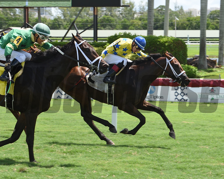 Castle King wins maiden special weight Sunday, August 9, 2020 at Gulfstream Park. Photo: Coglianese Photos/Lauren King