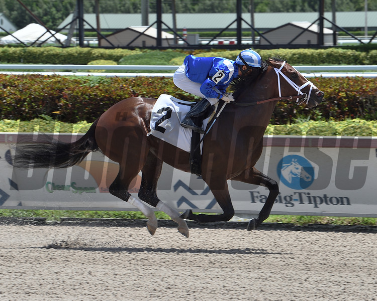 Tatweej - Maiden win, Gulfstream Park, July 25, 2020<br /> Coglianese Photos/Lauren King