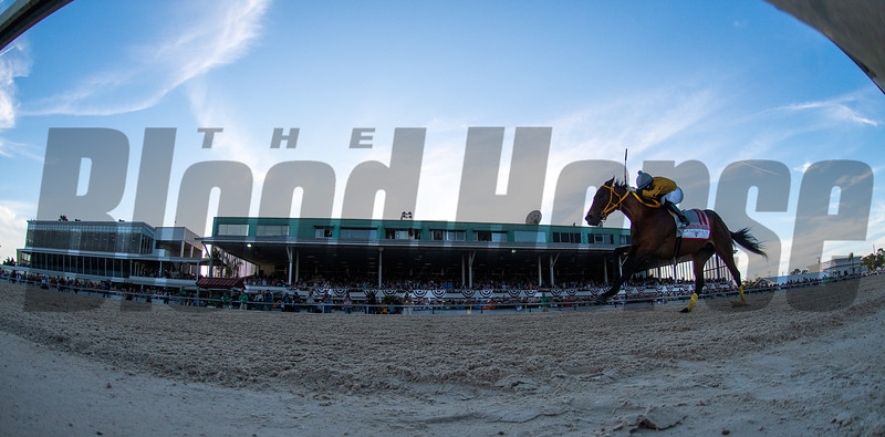 King Guillerno withnSamy Camacho up Wins The Tampa Bay Derby in Tampa.   Mar 7 2020<br /> ©Joe DiOrio/Winningimages.biz