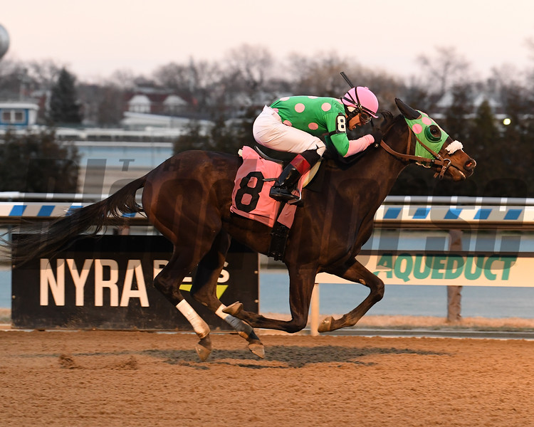Big Cyn wins a maiden claiming race February 9, 2020 at Aqueduct. Photo: Coglianese Photos