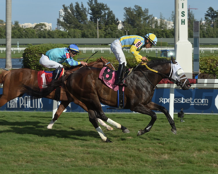 Island Commish wins the 2020 Kitten's Joy Stakes at Gulfstream Park  <br /> Coglianese Photos/Lauren King