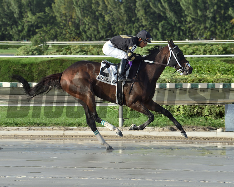 Tiz Possible Dear wins the 2020 Millions Distaff Stakes at Gulfstream Park West<br /> Coglianese Photos/Lauren King