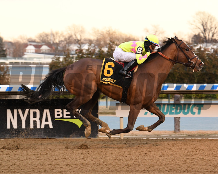 More Mischief wins the 2020 Biogio's Rose Stakes at Aqueduct. Photo: Coglianese Photos/Susie Raisher