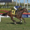 Hear My Prayer wins the 2020 Melody of Colors at Gulfstream Park<br /> Coglianese Photos/Lauren King